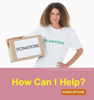Make a charity website